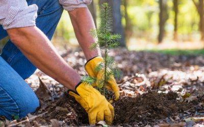 Avoid These Trees in Your Landscaping